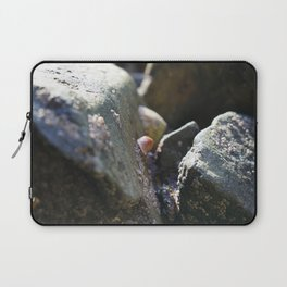 Sea Snails Grazing on Ocean Weathered Rocks with Barnacles Laptop Sleeve