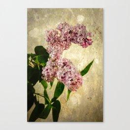 Vintage Lilacs in Bloom Canvas Print