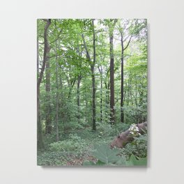 Forest dreaming Metal Print