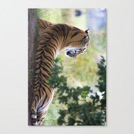 tiger2 Canvas Print