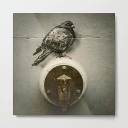 The Pigeon Landed on the Water Fountain Metal Print
