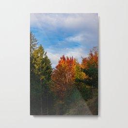Autumn Forest Metal Print