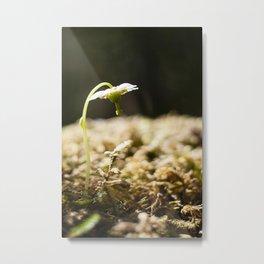 Shy Maiden Photography Print Metal Print