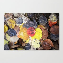 Multicolored Aspen Leaves in Woods Canvas Print