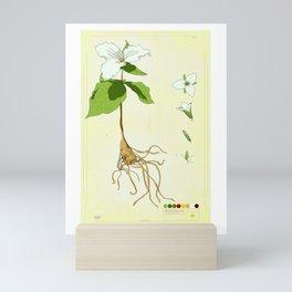 White Trillium Collection Mini Art Print
