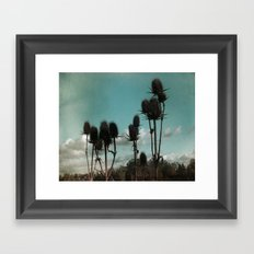 Prickly Teasels  Framed Art Print