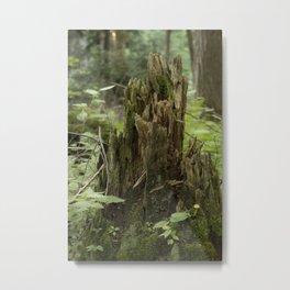 Mushroom Old Stump Metal Print
