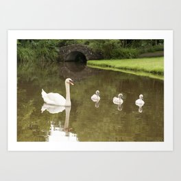 Swans day out Art Print