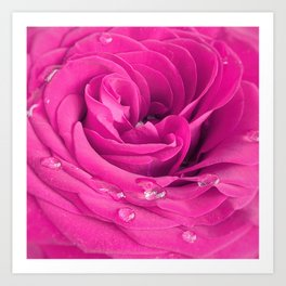 Pink rose with water drops Art Print