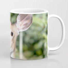 Watercolor Deer, Eastern Whitetail 03, Cape Breton, Canada, Who Me? Coffee Mug