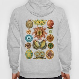 Ernst Haeckel Ascidiae Sea Squirts White Background Hoody