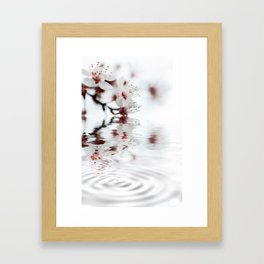 white cherry blossom and water reflection Framed Art Print