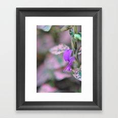 purple in my garden Framed Art Print