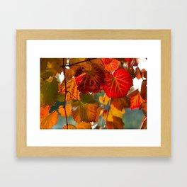 Autumn leaves 1 Framed Art Print