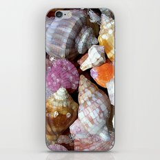 Pastel Shells iPhone & iPod Skin