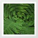 Ferns by sheldrick5