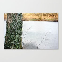 Laced in Ivy Canvas Print