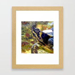 Turtle II Framed Art Print