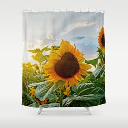 Sunflower in the sunset Shower Curtain