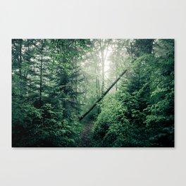 Fallen Tree in Misty Forest Canvas Print