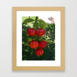 Fruta Pitangas Brasileiras !! Framed Art Print