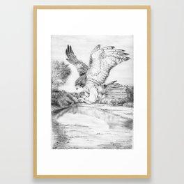 Red-Tailed Hawk, Big Bend National Park Framed Art Print
