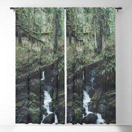 California Redwood Rainforest - Nature Photography Blackout Curtain