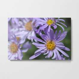 Daises Everywhere Metal Print