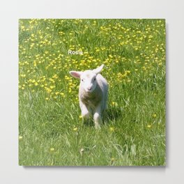 Rosie the Lamb Photography Metal Print
