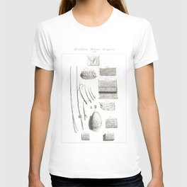 Human Anatomy Art Print FINGERPRINT EPIDERMIS FUR Vintage Anatomy, doctor medical art, Antique Book T-shirt