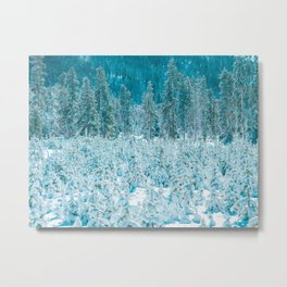 Tiny Forest // Snow Covered Evergreen Trees Spring Snow in the Mountains Cool Moody Photograph Metal Print