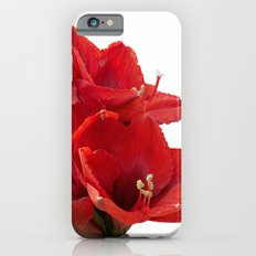 red amaryllis in bloom iPhone 6s Slim Case