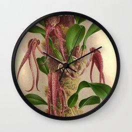 Bulbophyllum Grandiflorum Vintage Wine Orchids Wall Clock