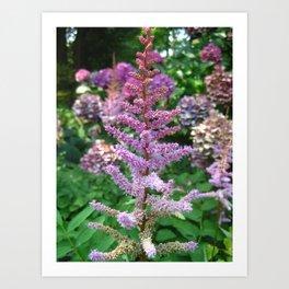 Flower at the New York Botanical Garden Art Print