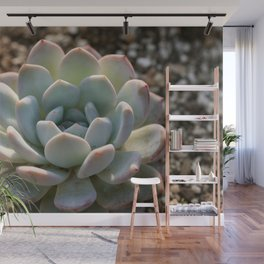 A Fleshy Plant In This Cactus Wall Mural