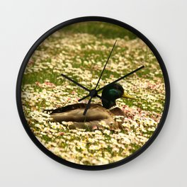 Duck In The Daisies... Wall Clock