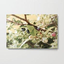 Vintage Blueberries Metal Print