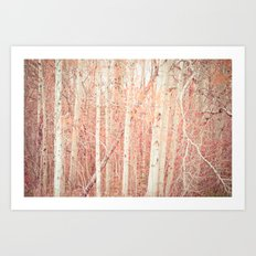 White Birch Trees Art Print
