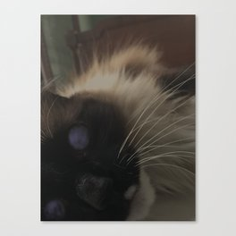moon eyed Canvas Print