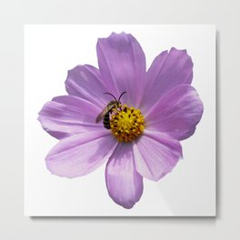 Bee on purple flower Metal Print