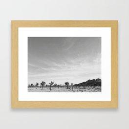Joshua Tree Grove Framed Art Print