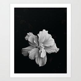 Hibiscus Drama - Black and Grey Art Print