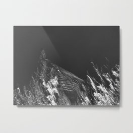 276 | austin Metal Print