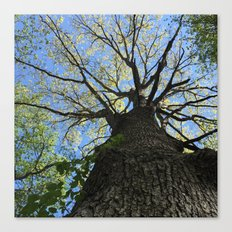 Forest Therapy Canvas Print