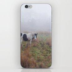 Black and White Horse iPhone & iPod Skin
