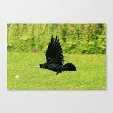 black crow in flight Canvas Print