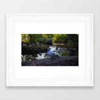 pigeon Framed Art Prints featuring Pigeon by Elliott Kemp Photography