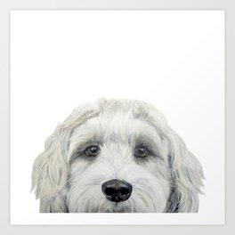Labradoodle white by miart Art Print