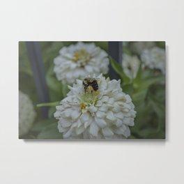 Bee Boi 2 Metal Print