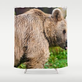 Gracious Adult Grizzly Bear Woodside With Cute Look On Face Close Up Ultra High Resolution Shower Curtain